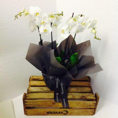Perfect Phalaenopsis Planter