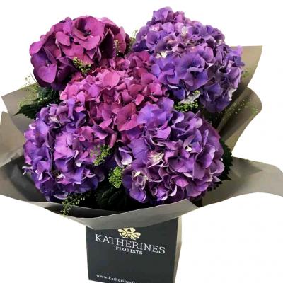 Stylish Hydrangeas x 5 Flowers Bouquet