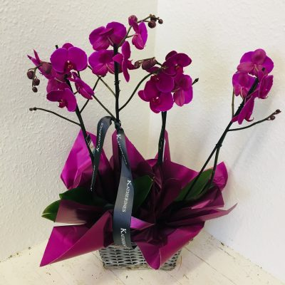 Purple Double Orchid Plant Basket
