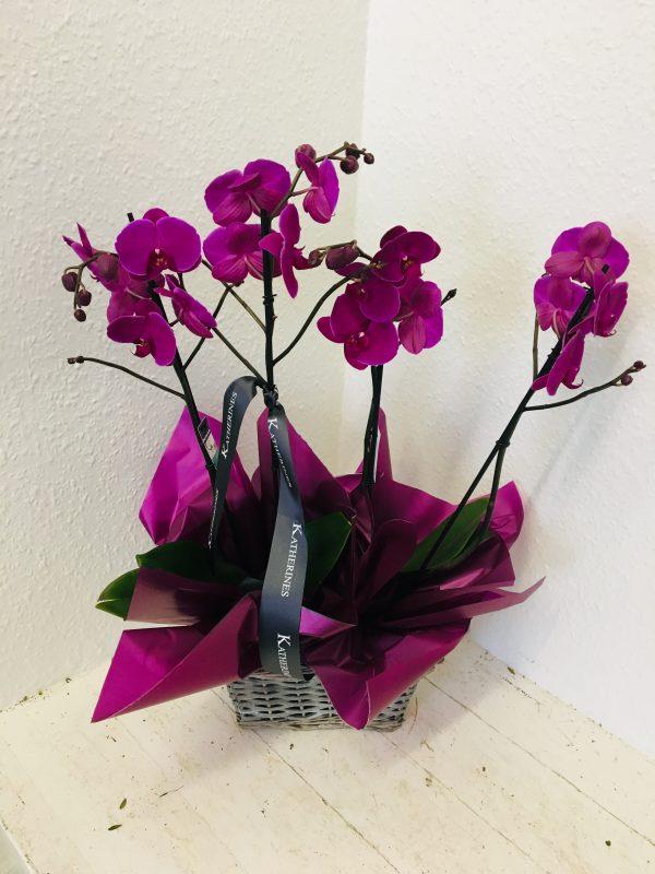 Purple Double Orchid Plant Basket