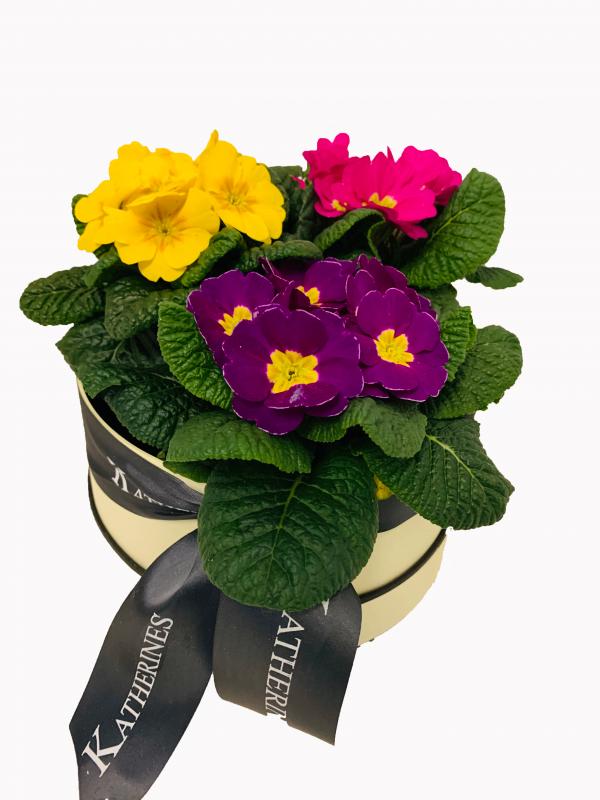 Pretty Primula Flowers Hatbox