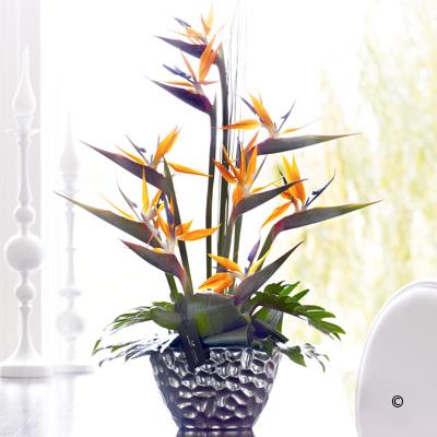 Luxury Strelitzia Arrangement